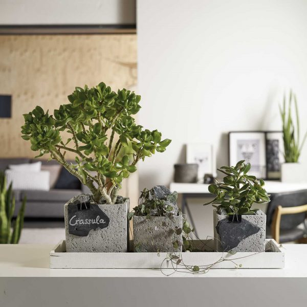 latina-concrete-ambiente-2