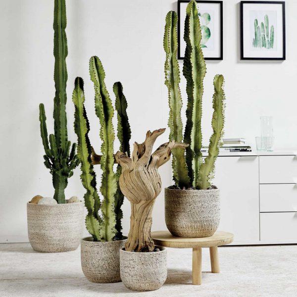 portland-ambiente-kaktus-2