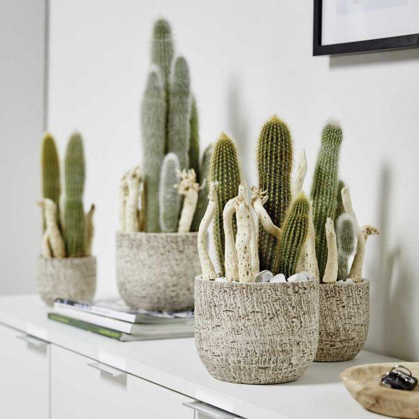 portland-ambiente-kaktus