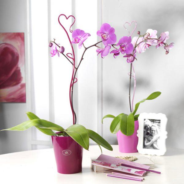 Orchideenstab-07