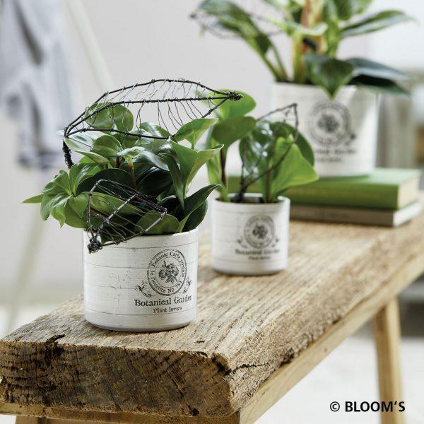 vintagegarden_botanicgarden