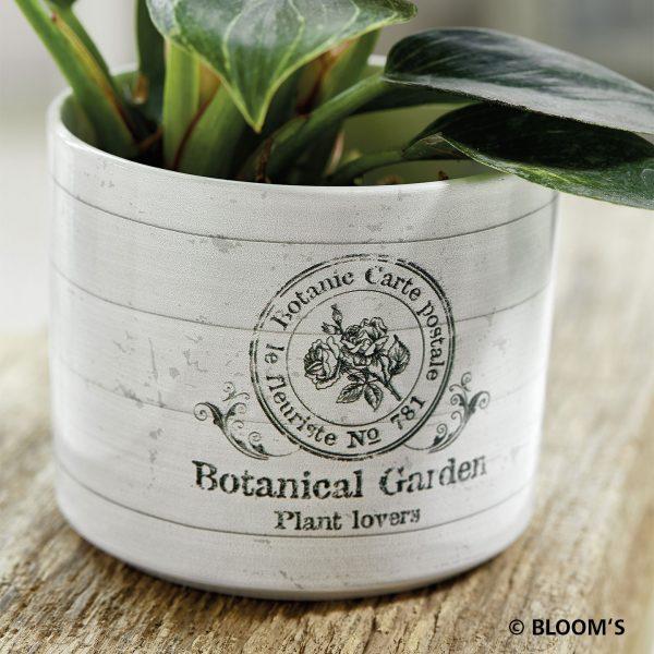 vintagegarden_botanicgarden_01